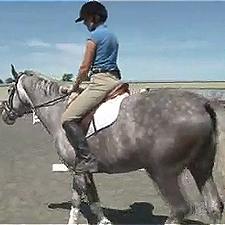 horse-trot